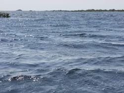 Gulfbreeze