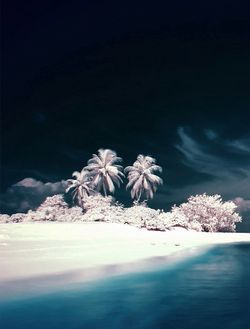 paradise965