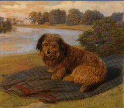 Boz Skye Terrier Kent