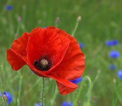 No.1 BFTS Fallen Cadets Memorial